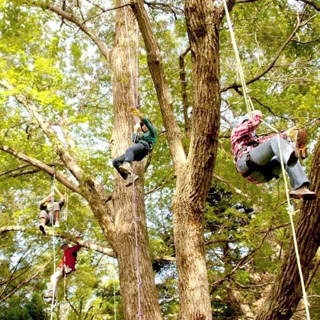 ツリーイング(木登り)体験